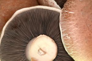 Istock_mushroomssmall